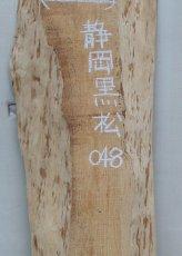 画像2: 黒松(クロマツ)-048 (2)