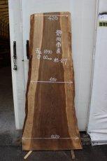 画像1: 杉(スギ)-127 (1)