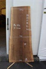 画像1: 杉(スギ)-122 (1)