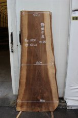 画像1: 杉(スギ)-126 (1)