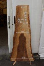 画像1: 杉(スギ)-129 (1)