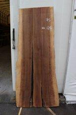 画像2: 杉(スギ)-124 (2)