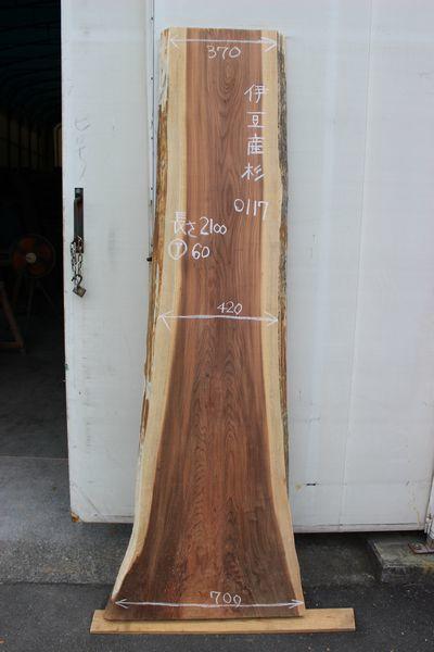 画像1: 杉(スギ)-117 (1)
