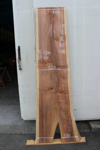 画像1: 杉(スギ)-116 (1)