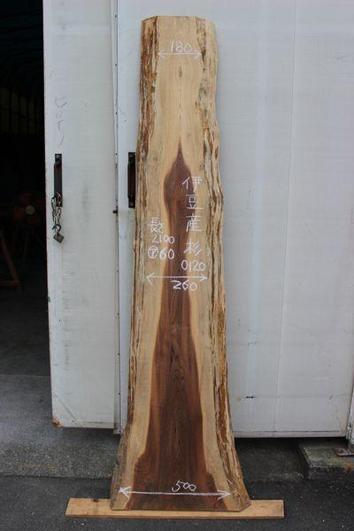 画像1: 杉(スギ)-120 (1)