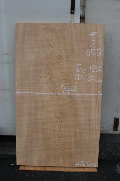 画像1: 樅(モミ)-075 (1)