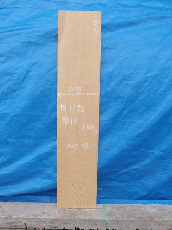 画像1: 槇(イヌマキ)-024 (1)