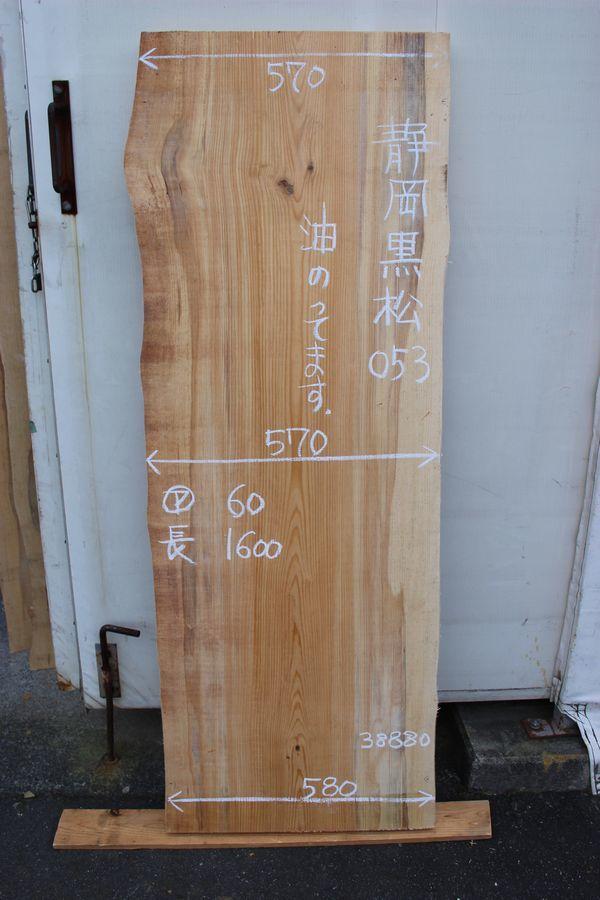 画像1: 黒松(クロマツ)-053 (1)