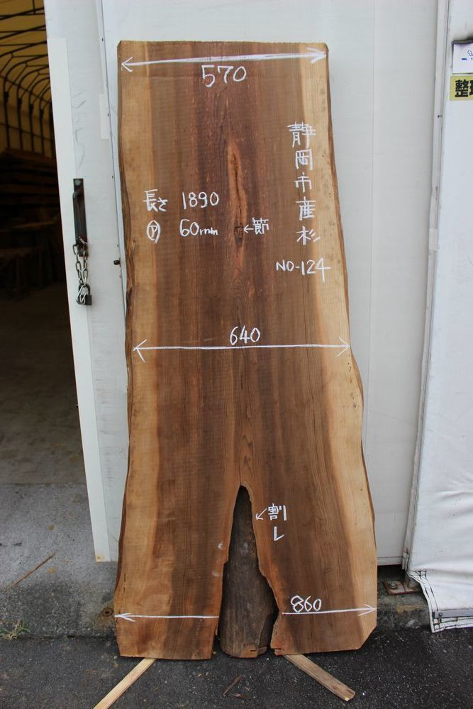 画像1: 杉(スギ)-124 (1)